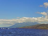 Springende Delfine sieht man eigentlich bei jeder Ausfahrt, Pico/Azoren