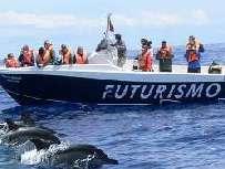 Wal-und Delfinbeobachtung auf Sao Miguel/Azoren